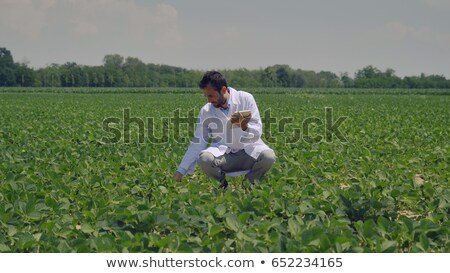 Farmer or agronomist in soy bean field Stock photo © simazoran