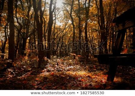Piros hdr pad kép festett park Stock fotó © bobkeenan