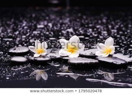 Blanco negro flores estilizado blanco flor naturaleza Foto stock © nurrka