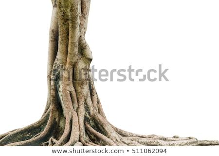 ahşap · çam · ağaçlar · sanayi - stok fotoğraf © borna_mir