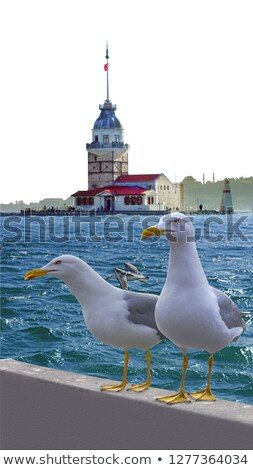 Stock photo: A seagull talking to his friend.