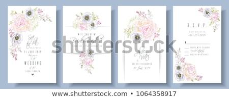 coleção · floral · banners · flores · da · primavera · isolado · branco - foto stock © imaster