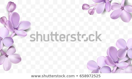 Violet background vector flowers Stock photo © lossik