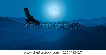 The hawk is flying in the forest Stock photo © ajlber