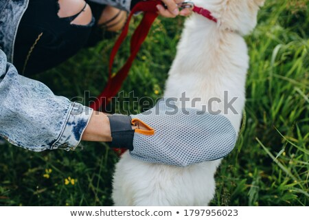 dog fur Stock photo © taviphoto