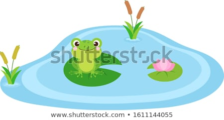 Frog in swamp Stock photo © franky242