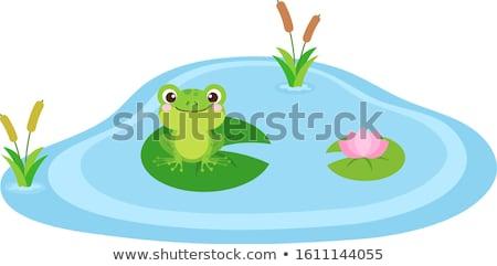 kurbağa · bahçe · gölet - stok fotoğraf © franky242