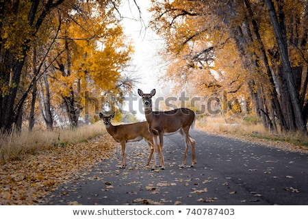 deer with fawn on the road Stock photo © RuslanOmega