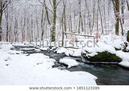 Winter park stream in snow Stock photo © michey