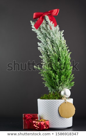 Rood · boeg · decoratie · kerstboom · vakantie - stockfoto © chrisbradshaw