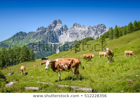 alpine landscape with cows Stock photo © vwalakte