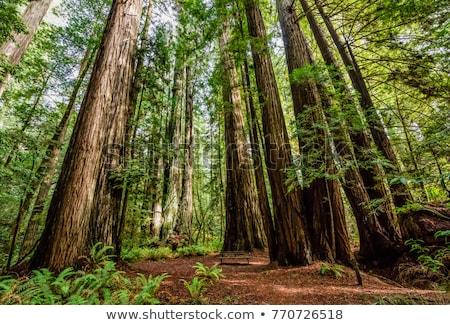 alto · árvores · outono · ver · floresta · céu - foto stock © artlens
