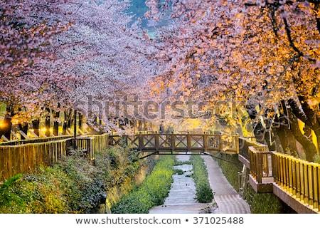 Floral Scenery Foto d'archivio © cozyta
