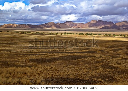 tree in open field namibia stock photo © michaklootwijk