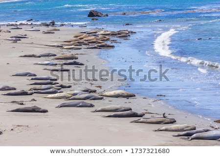 hugging young male sea lions at the sandy beach relax stock photo © meinzahn