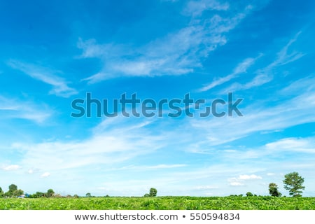 green farm with blue sky and white clouds stock photo © elwynn