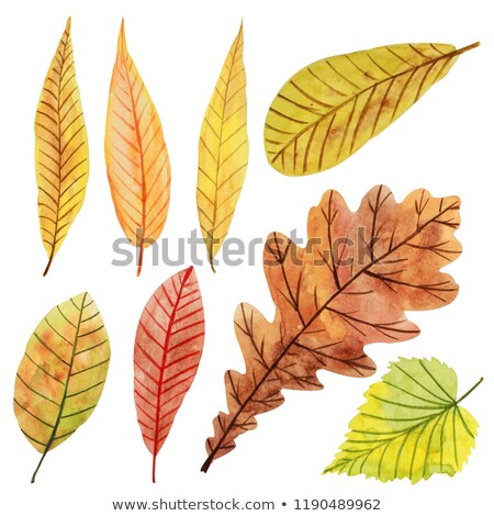 Stock photo: Orange watercolor aspen leaf