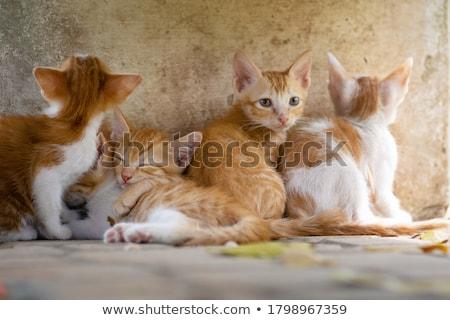 Mooie kat zoete muur hemel oog Stockfoto © Aitormmfoto