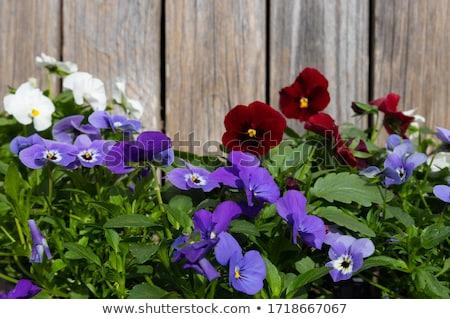 mooie · bloem · natuur · ontwerp · kunst · groene - stockfoto © Norberthos