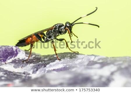Ritratto vespa rock studio parco animale Foto d'archivio © t3rmiit