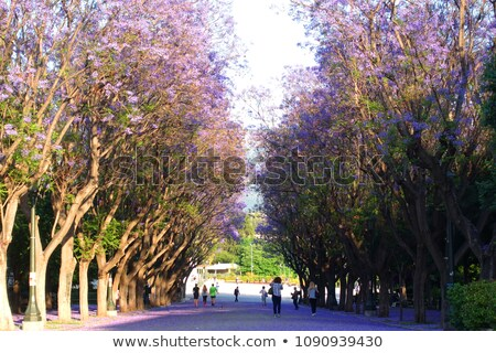 palácio · congresso · Buenos · Aires · Argentina · céu · bandeira - foto stock © andreykr
