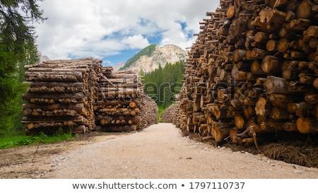 yakacak · odun · kıyılmış · ev · ağaç · yangın - stok fotoğraf © valeriy
