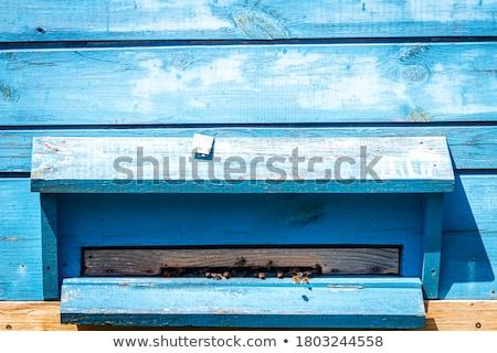 Pszczół na zewnątrz ul metaliczny niebieski Zdjęcia stock © Valeriy