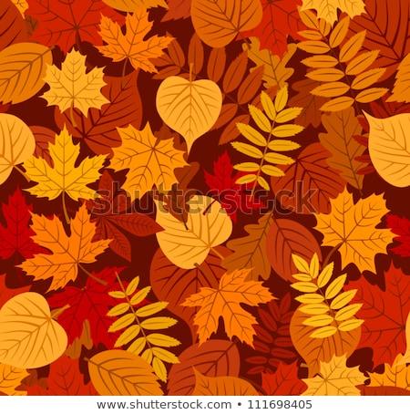 autunno · coppia · cadere · giù · acero · design - foto d'archivio © beholdereye