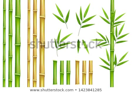 Branch with green bamboo leaves vector illustration Stock photo © LoopAll
