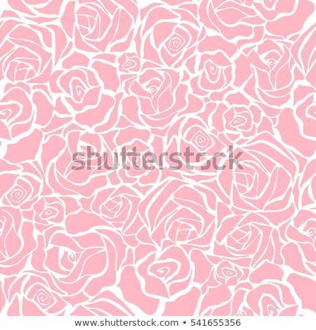 Naadloos rozen patroon vector witte Stockfoto © ElaK