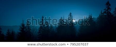 Foto stock: Cena · pinho · árvores · cena · noturna · noite · ilustração