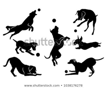 figure white dog stock photo © brux