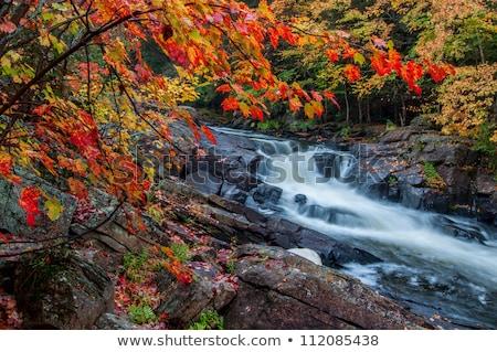 çerçeve akçaağaç ağaç yaprakları kayalar kırmızı Stok fotoğraf © ozgur