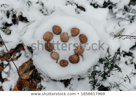 Ceviz kabukları kar kış sezonu soyut Stok fotoğraf © stevanovicigor