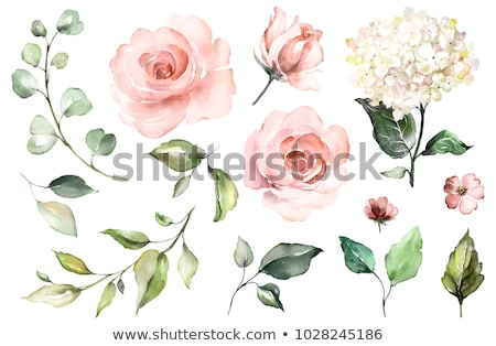 set of pink roses stock photo © blackmoon979