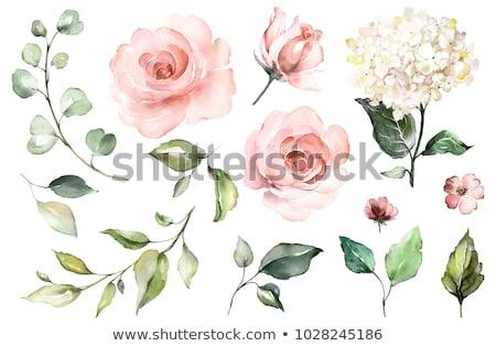 Ayarlamak pembe güller boyalı gül kuvars Stok fotoğraf © blackmoon979