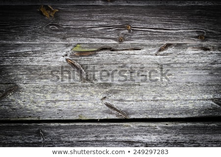 Detail of Old cracked oak timber Stock photo © Klinker