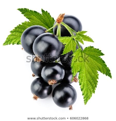 Blackcurrant berries with leaves, black currant Stock photo © yelenayemchuk