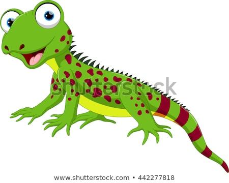 イグアナ トカゲ 幸せ 子供 ストックフォト © Krisdog