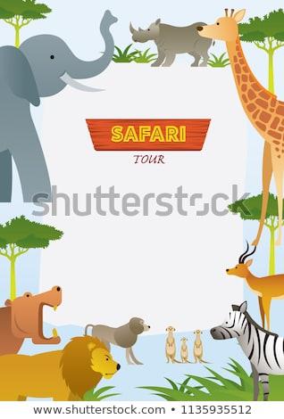grens · sjabloon · wilde · dieren · illustratie · natuur · konijn - stockfoto © bluering