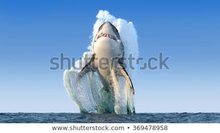 Great white shark swimming in the ocean Stock photo © bluering
