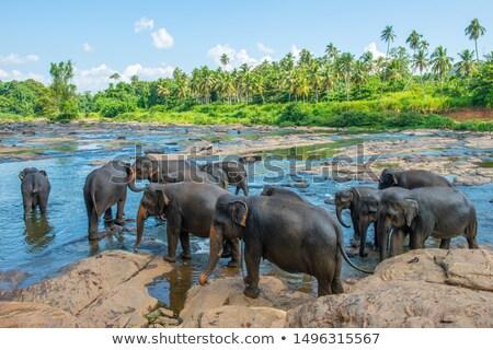 filler · park · Sri · Lanka · bebek · arka · plan · cilt - stok fotoğraf © bezikus