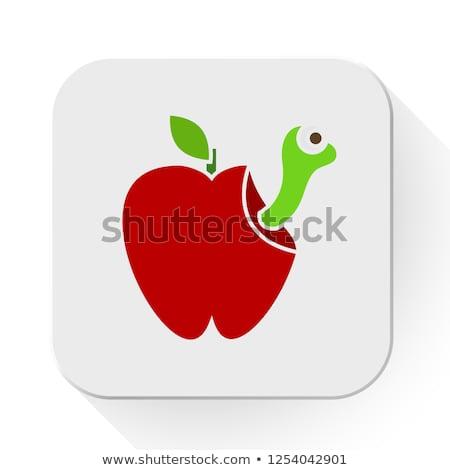 rohadt · piros · alma · gyümölcs · levél · rajz · rajz - stock fotó © hittoon
