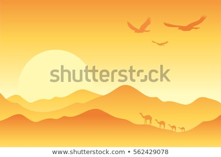 Desert scene with camels at sunset Stock photo © bluering