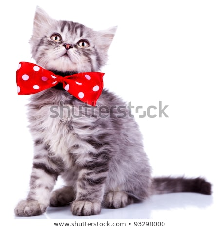 seated cat with grey soft fur looks up Stock photo © feedough