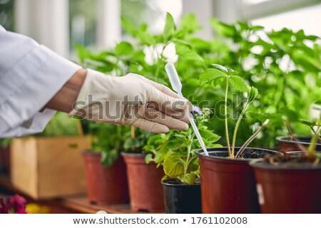 Stock photo: Hands Seedling Transfer Pot
