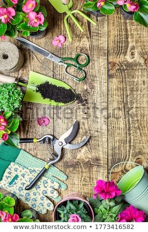 Gardening tools and flower on wooden background stock photo © Virgin