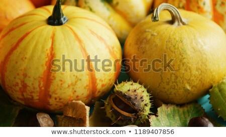 Pompoenen ingericht bladeren boven Stockfoto © dash