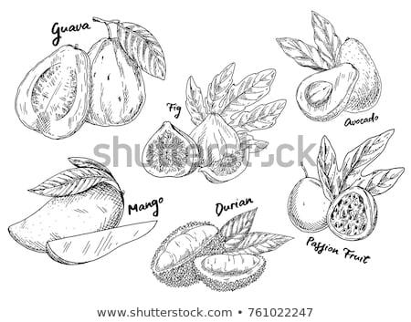 鱷梨 鱷魚 梨 水果 好吃 片 商業照片 © robuart