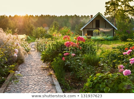 Quintal jardim belo paisagem casa grama Foto stock © iriana88w